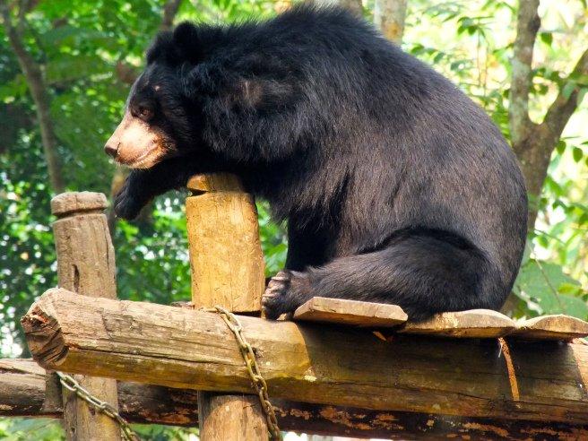 osos en quang si waterfalls