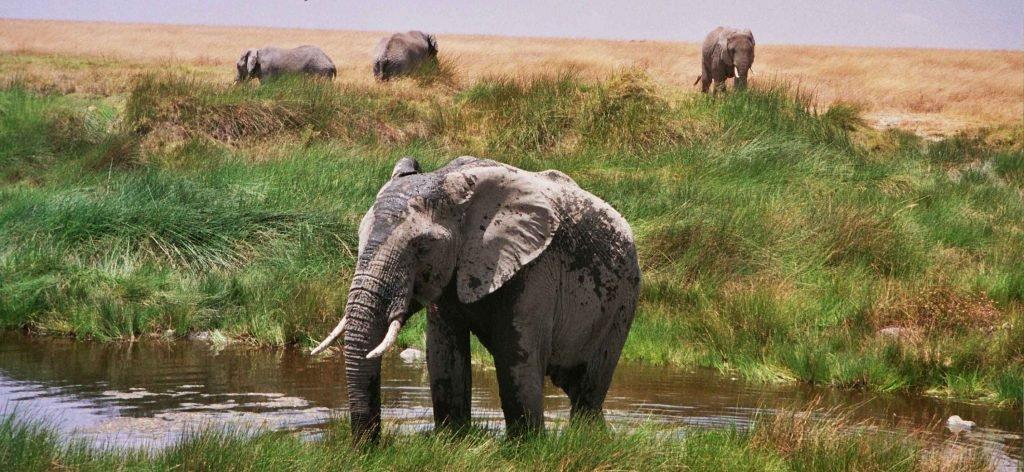 tanzania-el-serengueti-3-79
