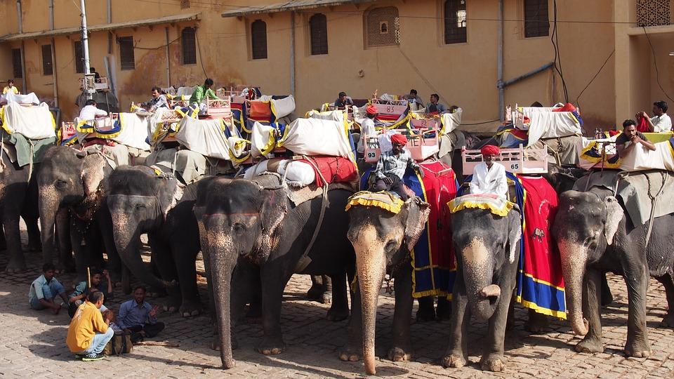Paseo en elefante por Jaipur