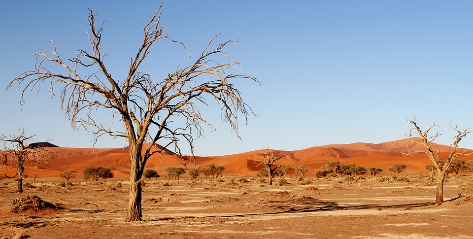 viaje al desierto del Kalahari