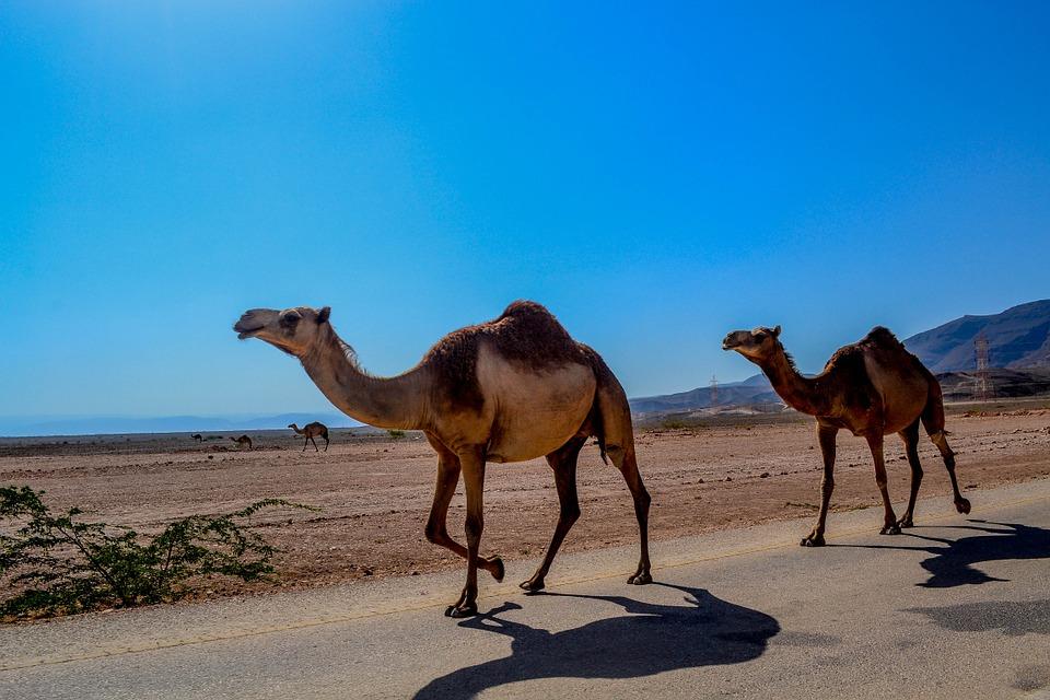 Qué ver en Omán