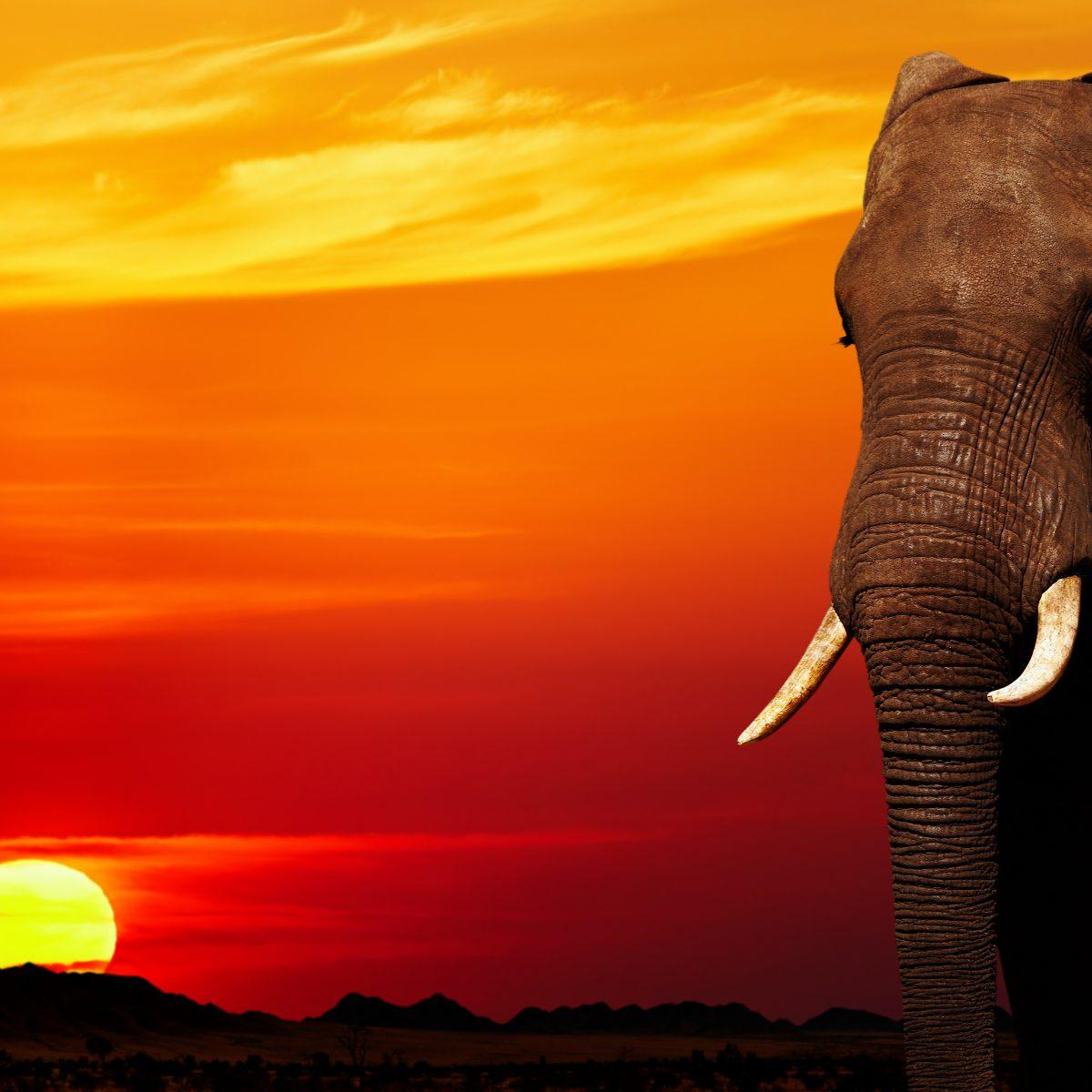 Los viajes a Kenia durante el coronavirus